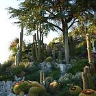 Cactus Garden in Eze by Fara