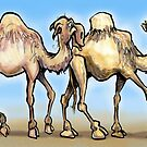 Camels by Kevin Middleton