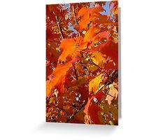 Fall Colors Greeting Card