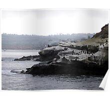Cormerants, Sea Lions, Pelicans... Poster