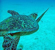 Hawksbill Turtle 3 by Leon Heyns