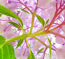 Hydrangea Flower Floral art prints Baslee Troutman by BasleeArtPrints