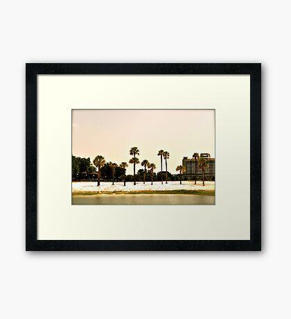 Disney Trees Framed Print
