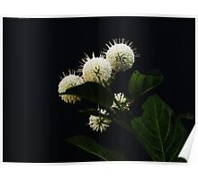 In Bloom In June Poster