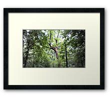 Hinkson Forest Framed Print