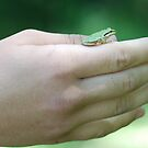 Small Frog by Barbara Anderson