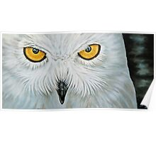Snow Owl - Schnee-Eule Poster