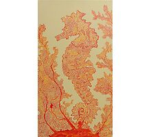 Seahorse in Orange Fan Coral Photographic Print