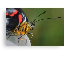 Face To Face With a Butterfly Canvas Print