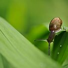 snail adventure by Tamara Cornell
