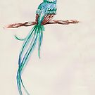 Quetzal by Dominika Aniola