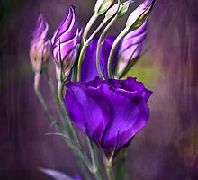 LISIANTHUS by clint hudson