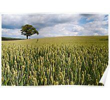 Wheat Field near Pately Bridge Poster