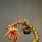 sluggish by Tamara Cornell