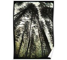 Pine Trees Reach For The Skies 1 - Yosemite National Park - Vintage Poster
