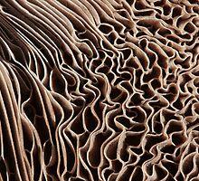 Rapids Dissolving by Marilyn Cornwell