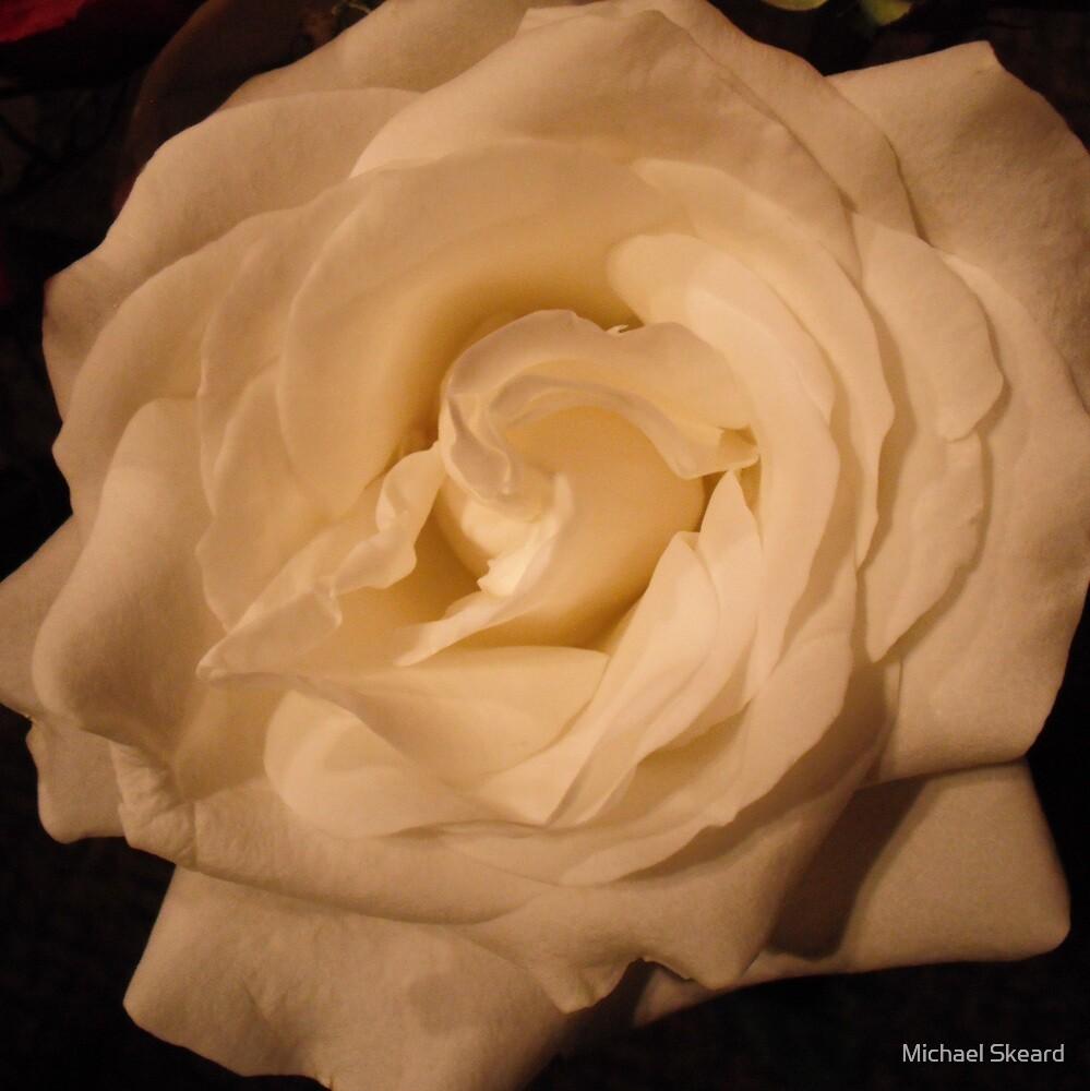Rose White by Michael Skeard