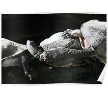 Tortoise Gathering Poster