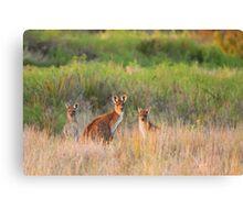 Kangaroo Family Canvas Print