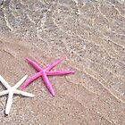 Starfish love by MarcRusso