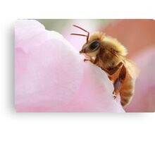 Honey Bee Break Canvas Print
