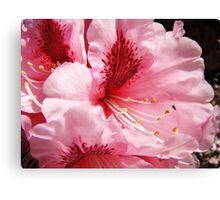 Pink Rhododendron Flower art prints Floral Garden Canvas Print