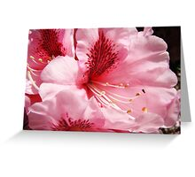 Pink Rhododendron Flower art prints Floral Garden Greeting Card
