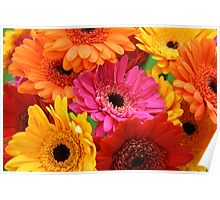 Brightly coloured gerbera Poster