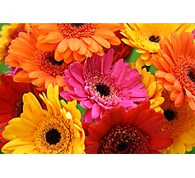 Brightly coloured gerbera Photographic Print