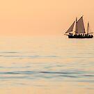 Chasing the Setting Sun by Mieke Boynton