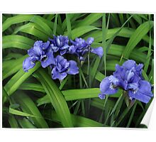Purple and Green Floral Poster