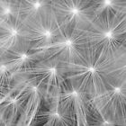Fireworks by David Kocherhans