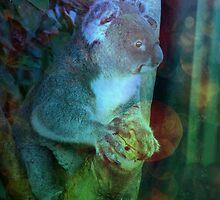 Koala Has Seen Things by tiffymoon