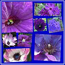 Pink and Purple Passion Floral Collage by BlueMoonRose