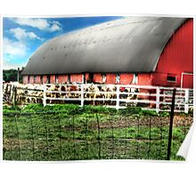 Cow Barn Poster