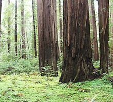 Avenue of Giants by Lindsey Fisher