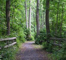 Catharine Valley Trail by Mark  Reep