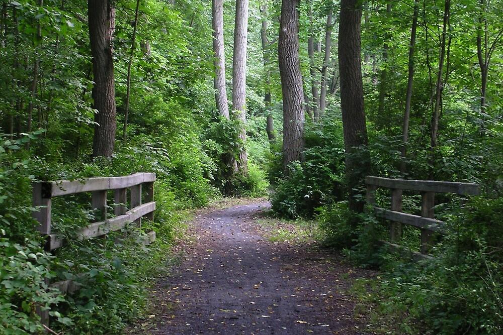 Catharine Valley Trail 2 by Mark  Reep