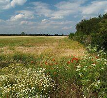 Marston Moor 1 by WatscapePhoto