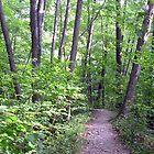Six Mile Creek 1 by Mark  Reep