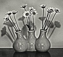 Table Daisies by Randy Shannon