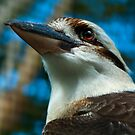 Where the Kookaburras Call  by Damienne Bingham