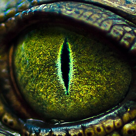 Eye of the Crocodile II [Print & iPad Case] by Damienne Bingham