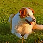 Milly in the Morning Light by trish725