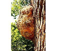 Gianormous Bee Hive Photographic Print