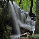 Forest Waterfall by Stephen Vecchiotti