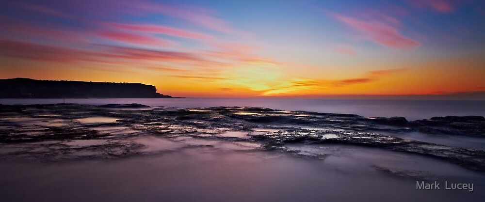 Chameleon Dawn by Mark  Lucey