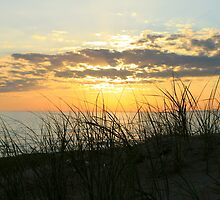 Dune Grass at Sunset by Joy Fitzhorn