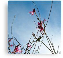 Stratosphere Pink Picotee Canvas Print