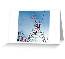 Stratosphere Pink Picotee Greeting Card